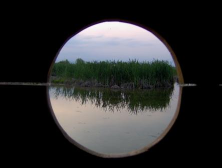 L'oasi delle Cicogne - Racconigi (2063 clic)