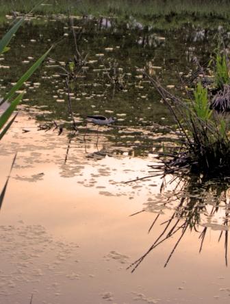 L'oasi delle Cicogne - Racconigi (2814 clic)