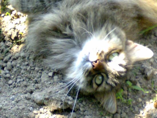 il mio gatto - Como (2224 clic)