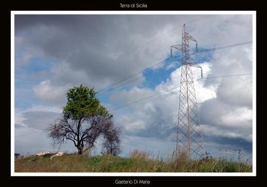 paesaggio siciliano  - Lentini (2881 clic)