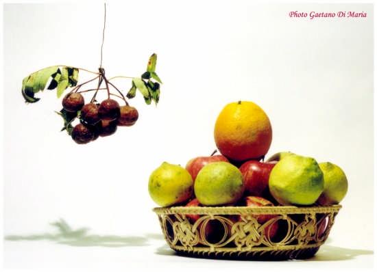 La frutta - Palermo (3445 clic)