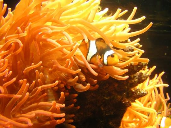 Nemo - Genova (2450 clic)