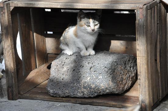 Il gattino ha trovato casa  - Paternò (2370 clic)