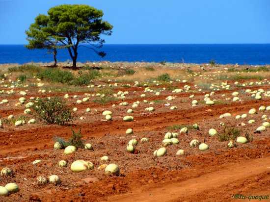 'Uova dei dinosauri' in Sicilia ? - Macari (8887 clic)