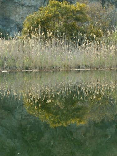 particolare dei laghi di Tindari (3652 clic)