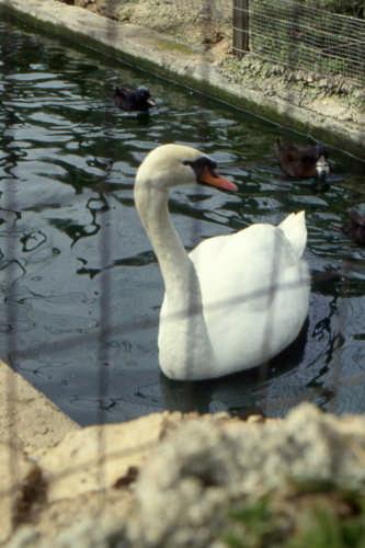 avere un bel collo.... - Trinitapoli (1151 clic)