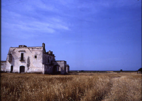 trinitapoli-masseria montaltino (2903 clic)