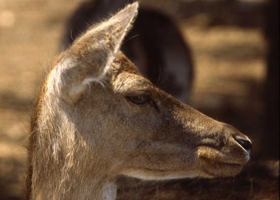zoo di fasano (2704 clic)