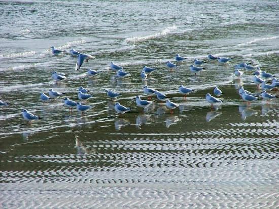 i gabbiani blu - Cefalù (3622 clic)