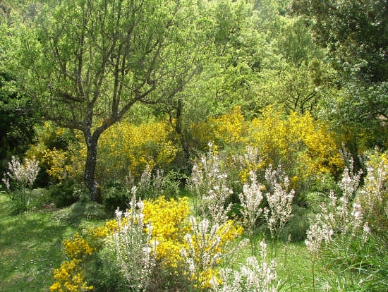 sottobosco nel Parco delle Madonie - Collesano (5191 clic)