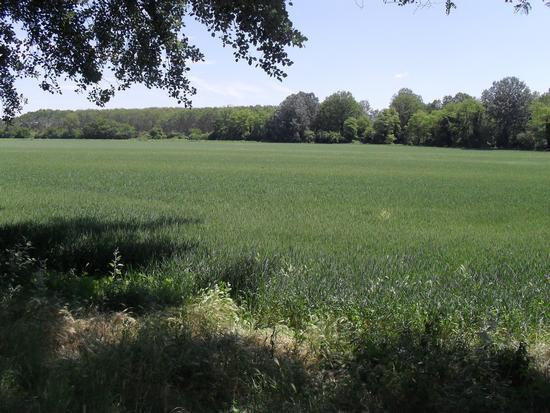 Tenuta dei Boscone - Camairago Lodi (2354 clic)