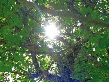Raggio di sole tra gli alberi - Maiella (3912 clic)