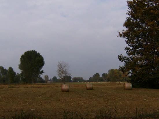 Campagna Bergamasca - Mozzanica (2038 clic)