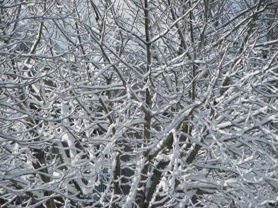 Neve - ATRI - inserita il 22-Feb-09