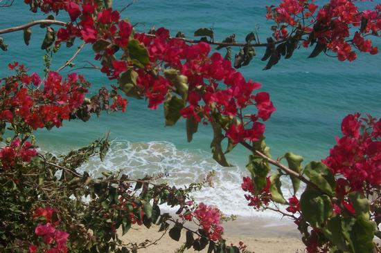 Isole Canarie - Desenzano del garda (1961 clic)