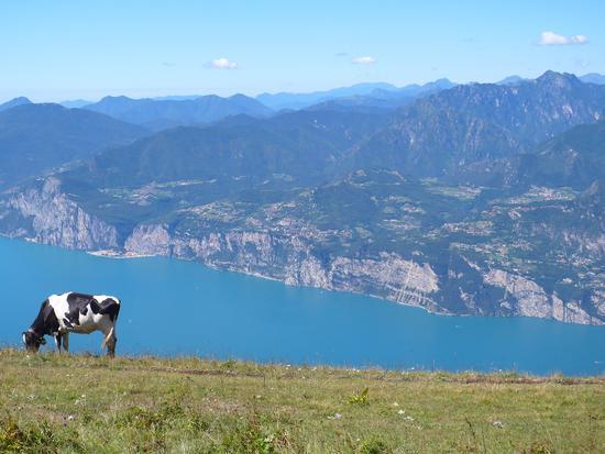 Monte Baldo - Malcesine (2119 clic)