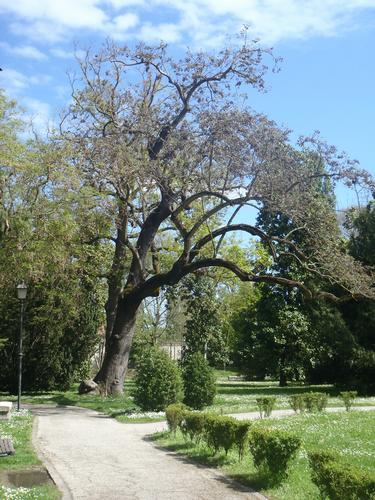 Parco Massari - aprile 2012 - Ferrara (760 clic)