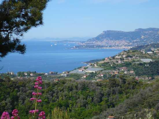 Veduta dalle colline di Camporosso (3390 clic)