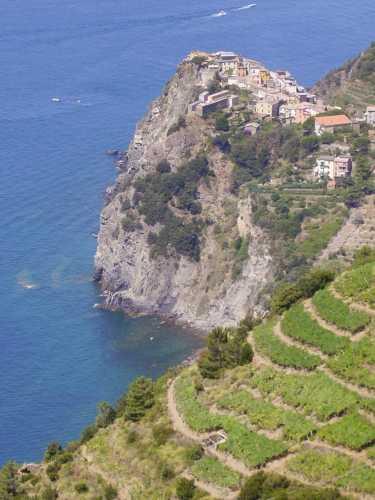 Corniglia e le terrazze (2391 clic)