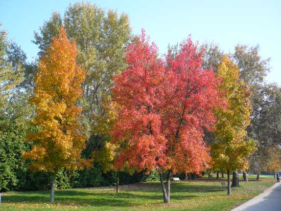 Autunno al Parco Urbano - Ferrara (4119 clic)