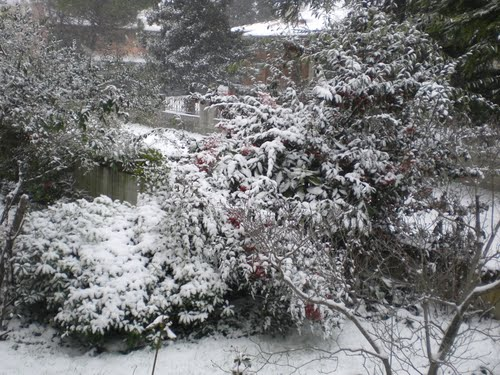Snow in the garden in ElmAgos B&B Udine - Friuli * Italy (2203 clic)