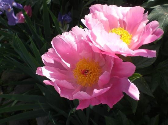 Flowers of ElmAgos B&B Udine Friuli Venice - Italy (2009 clic)