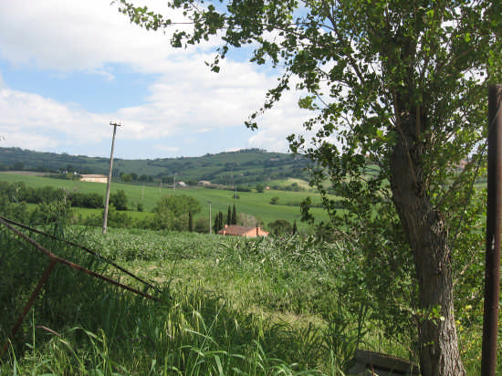 colline presso Tavullia (2245 clic)