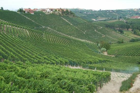 Geometria vitivinicola - Barolo (2745 clic)