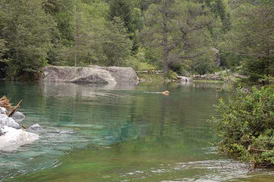SWIMMINGDOG - Val di mello (1716 clic)