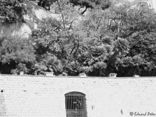 Le foto din Nettuno 34 (2350 clic)