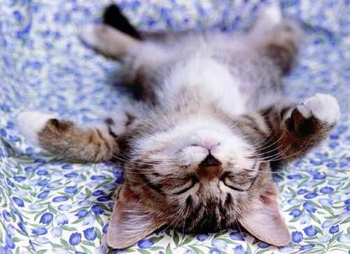 amante di gatti - Firenze (3295 clic)