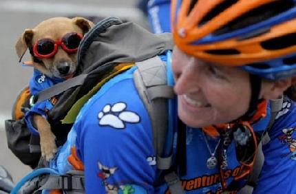 cane ciclista - Monza (2939 clic)