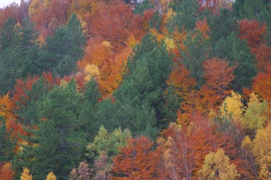 autunno sull'etna (2922 clic)