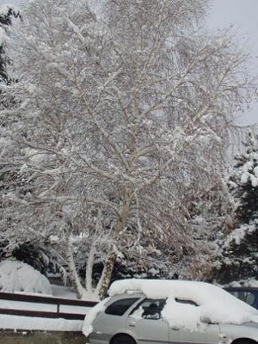Nevicata - Nus (3163 clic)