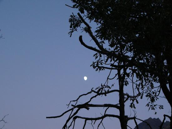 Verso il sentiero del timo - Nus (2454 clic)