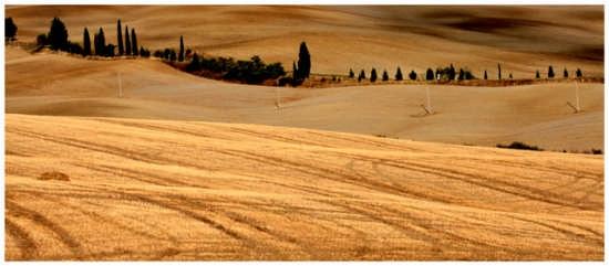 Dune dorate - Pienza (2800 clic)