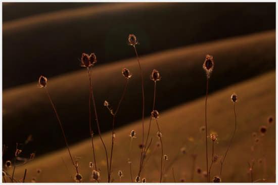 Fiore selvatico - PIENZA - inserita il 03-Nov-08
