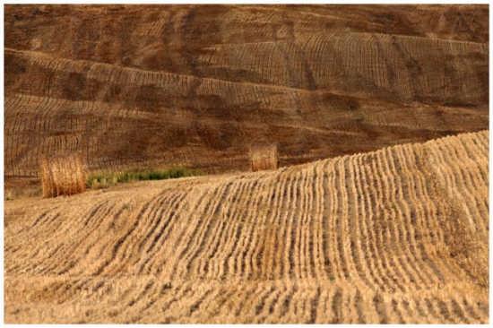 Valle dorata - Pienza (2132 clic)