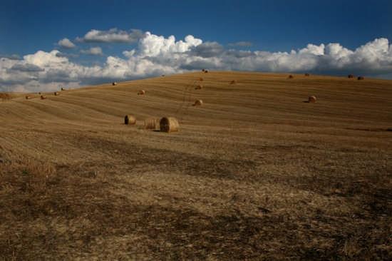 Oro di Siena  - Pienza (2922 clic)