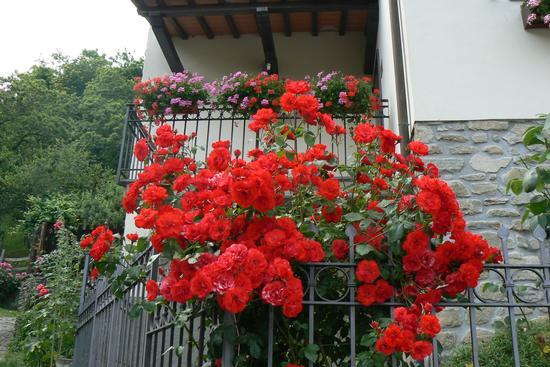 Romantica Gavigno - Cantagallo (1326 clic)