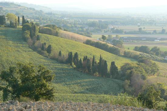 Campagna di fine agosto 6 - Monterado (1173 clic)