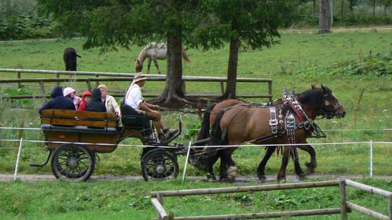 Carrozza nel parco - Falcade (2613 clic)