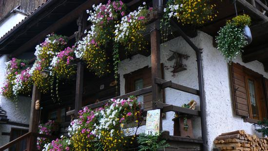 La casa più bella di Falcade (3927 clic)