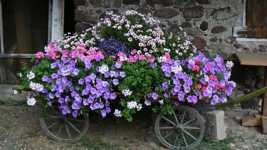 Poesia di fiori - FALCADE - inserita il 03-Sep-10