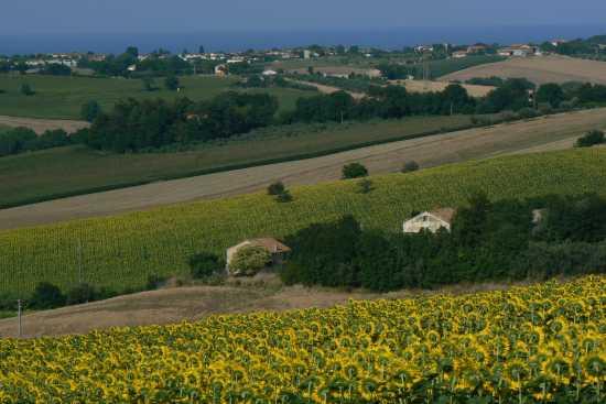 La campagna - Montemarciano (2206 clic)