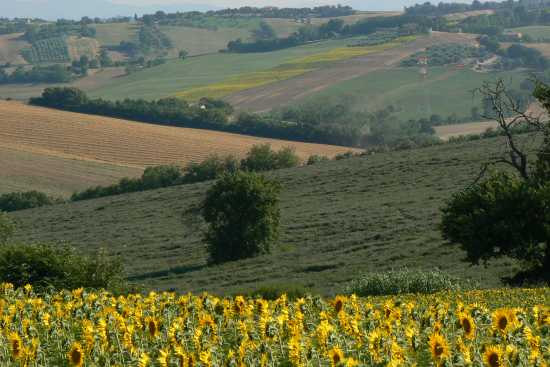 Campagna marchigiana - Montemarciano (4855 clic)