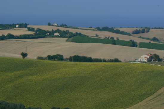 Campagna marchigiana  - Montemarciano (2161 clic)