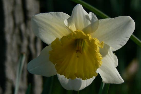 prova di primavera - Prato (2257 clic)