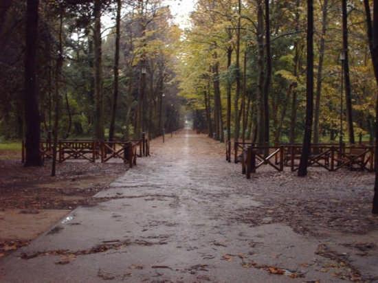 giornata di pioggia - Viareggio (3937 clic)