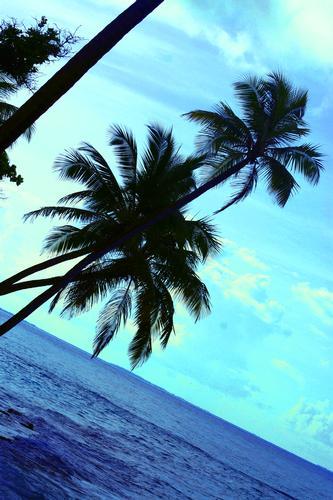 maldive (256 clic)
